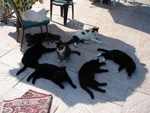 cat conspiracy_Tjflex2