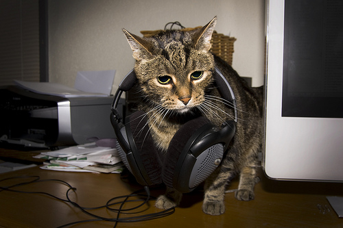Headphones cat_Pete Prodoehl