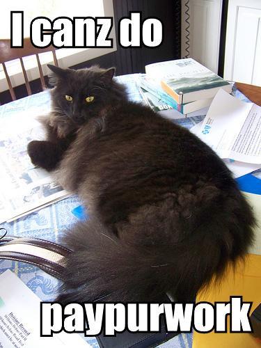 lolcat paperwork_cseeman