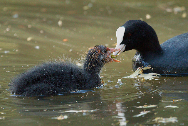 Sharing The Meal