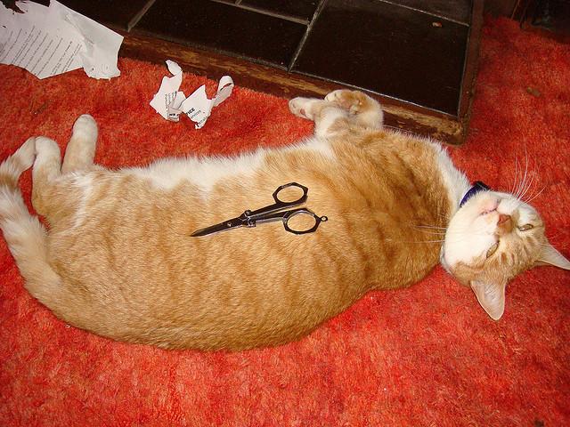 cat and scissor_
