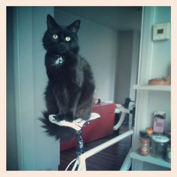 hipster cat_mariomenti