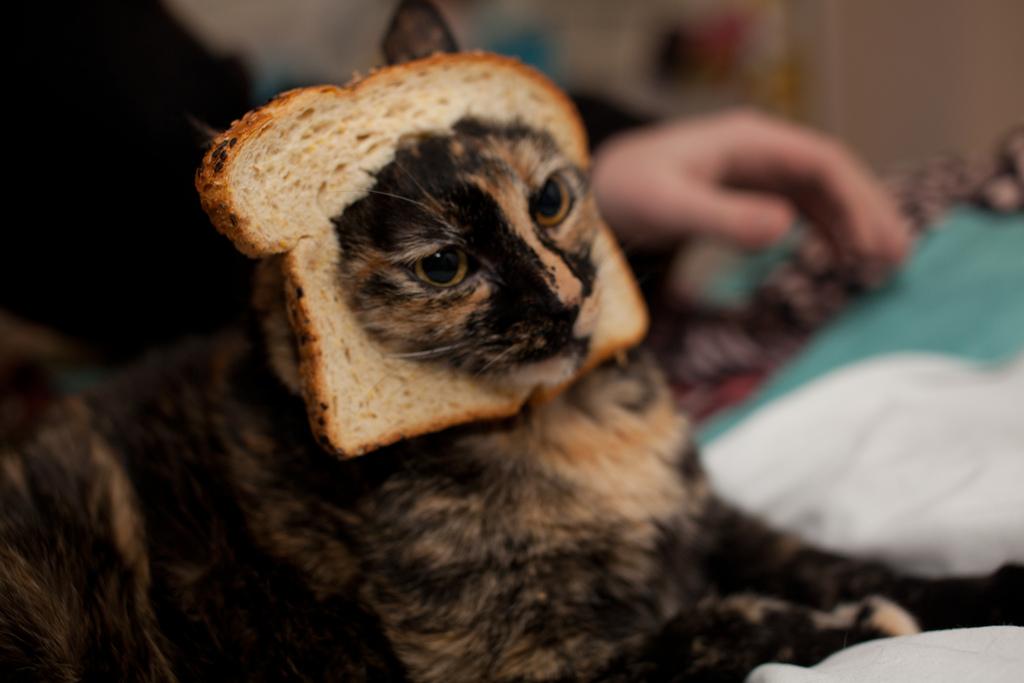 cat bread_pinguino k