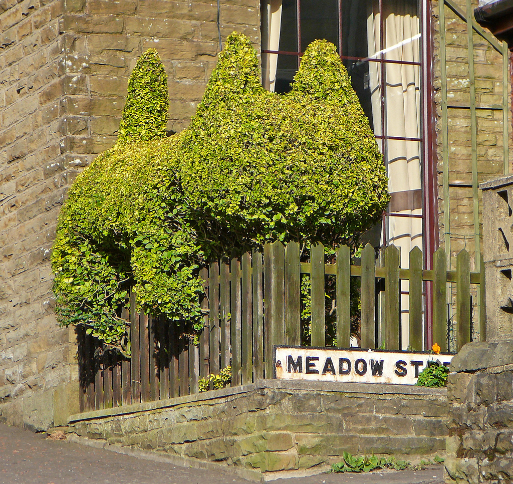 cat hedge_Tim Green