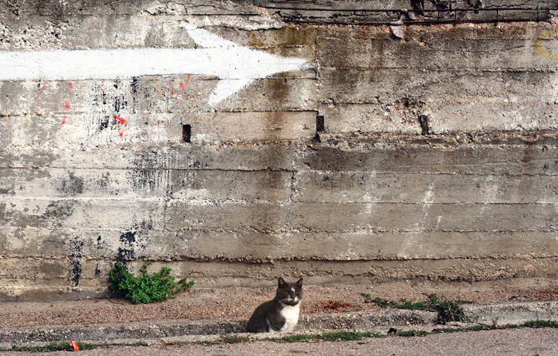 cat arrow_Igor Vtornick