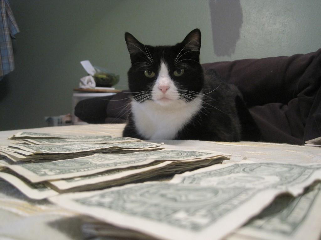 cat money_amanda