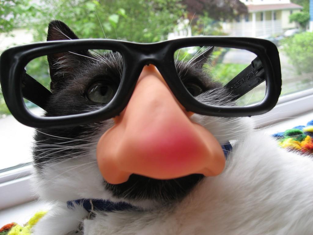 cat prank glasses_victoriafee