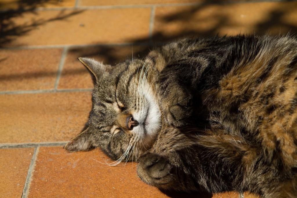 cat sun_david arndt